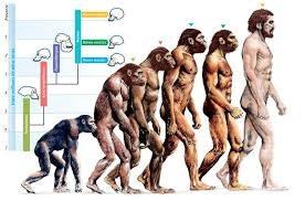 L'evoluzione dei viventi – Mappa Concettuale