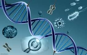 La Genetica – Schema Cmap